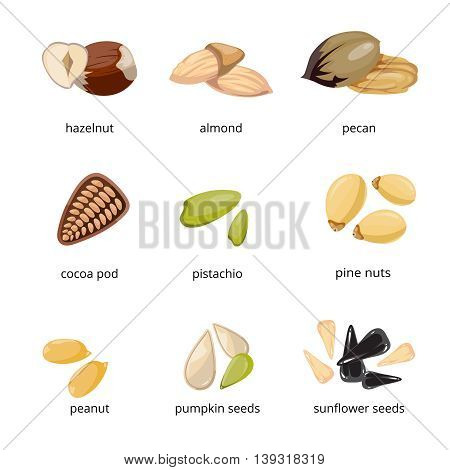 Seeds and nuts vector icons in cartoon style. Set of nuts hazelnut and pecan, food of nuts cocoa pod and pumpkin seeds illustration