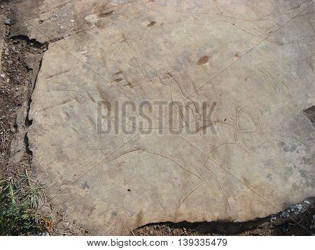 Predator preys on deer. Animals petroglyphs carved in rocks. Siberian Altai Mountains petroglyphs Russia poster