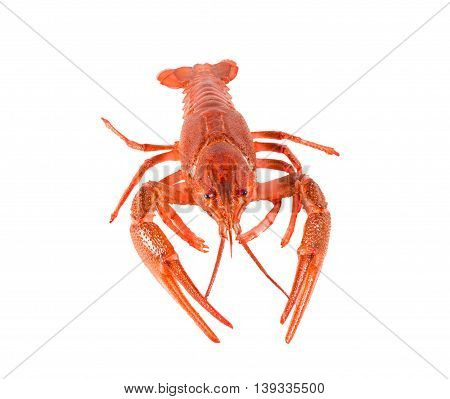 Fresh boiled red crayfish isolated on white background