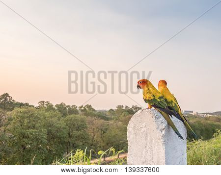 Colorful couple macaws sitting on a kilometer stone on the road selective focus