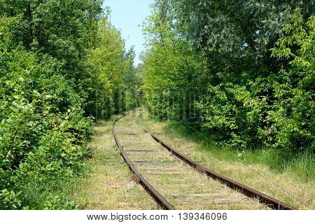 The railway passes in a summer forest