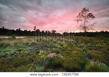 rainy sunrise over forest meadow Drenthe Netherlands