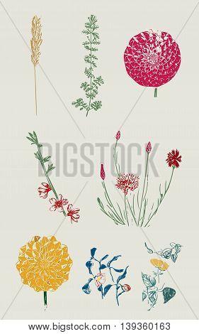 plants, flowers,flower, plant,briar, brier,bush, green, flower figure, nature, natural, wild,