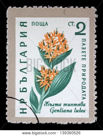 ZAGREB, CROATIA - JULY 03: A Stamp printed in Bulgaria shows Gentiana lutea flower, circa 1961, on July 03, 2014, Zagreb, Croatia