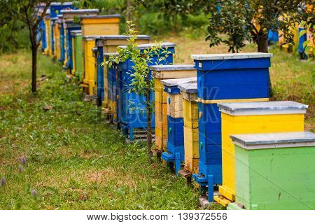 Beehives in row at nature apiary beekeeping