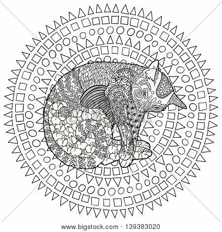 High detail patterned cat in zentangle style. Adult coloring page for anti stress art therapy with domestic animal. Template with cute pet for t-shirt, tattoo, poster or logo. Vector illustration.