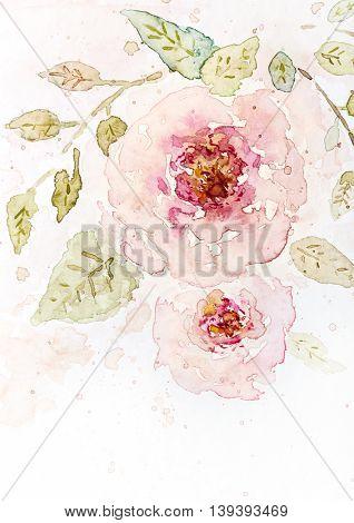 Vintage Watercolor Roses (hand drawn)