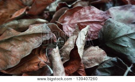 Dry leaves on the ground in different colurs