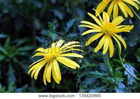 yellow flower in the garden outdoor daylight