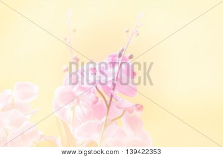 beautiful flowers made with color filters and blur