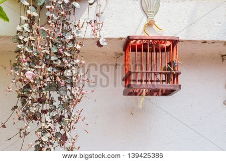 Imprisoned long horn grasshopper looking out of his cell in a red cage hanging from a white wall on a golden hook
