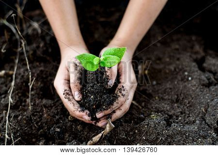 Seedling On Hand