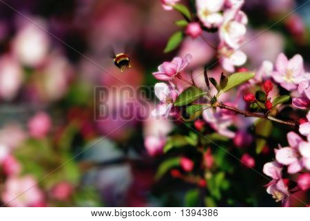 Flying Bee & Spring Blossoms