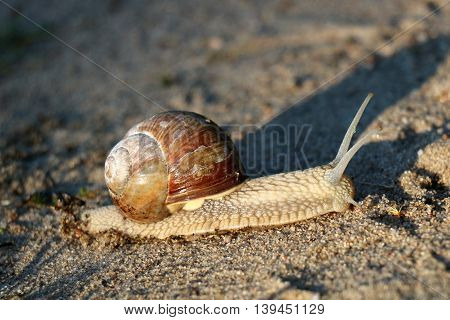 This invertebrate snail, gastropod with a spiral shell, live in damp places