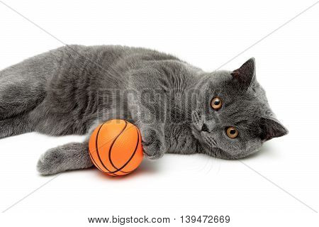 gray cat with an orange ball on a white background. horizontal photo.