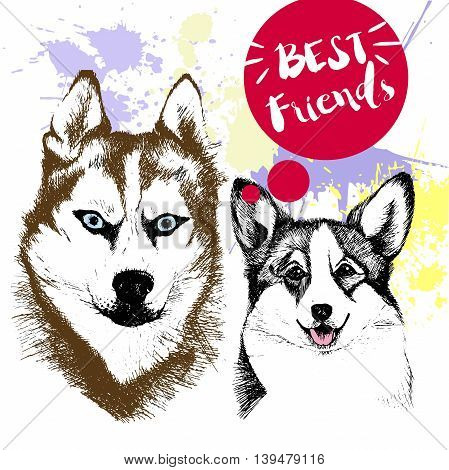 Vector hand drawn concept of siberian huskyr and welsh corgi frienship. Color hand drawn domestic dog illustration. Decorated with red blots. Best friends.