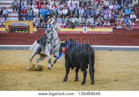 Jaen SPAIN- October 13 2008: Spanish bullfighter on horseback Diego Ventura bullfighting on horseback in the bullring of Jaen Spain
