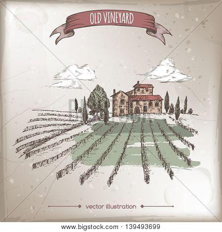 Color vineyard and cottage landscape hand drawn vector sketch on grunge bakground. Great for vine and travel ads, brochures, labels.