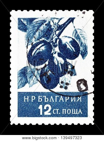 BULGARIA - CIRCA 1956 : Cancelled postage stamp printed by Bulgaria, that shows plums.