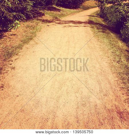 Pathway in woods with dirt road - Instagram effect