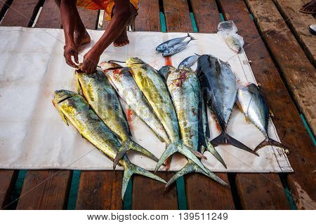 Fish catch tuna and dorada prepared by the fisherman