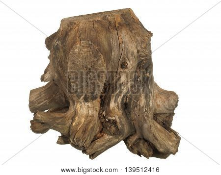 Driftwood tree stump isolated on white background