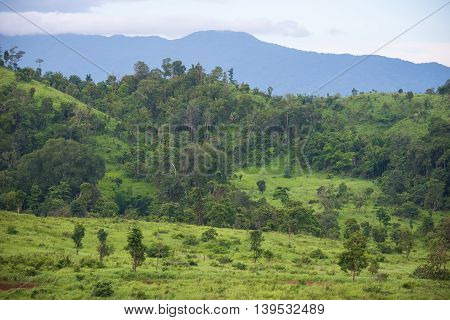 Savanna grass field with mountain in Thung Yai Naresuan East Wildlife Sanctuary - The world heritage site, Tak Thailand.