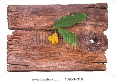 climbing; thai; petal; ylang-ylang; background; white; green; nature; green; decoration; yellow; natural; fresh; flower; plant; leaf; organic; tropical; asian; blossom; flora; asia; petal; spa; bouquet; botanical; thailand; aromatherapy; fragrant