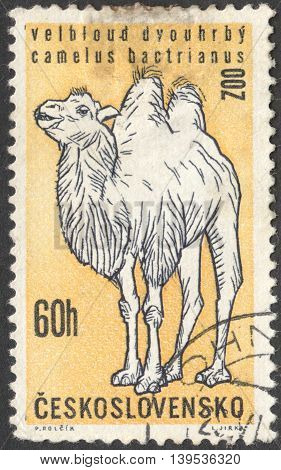 MOSCOW RUSSIA - JANUARY 2016: a post stamp printed in CZECHOSLOVAKIA shows an animal with the inscription