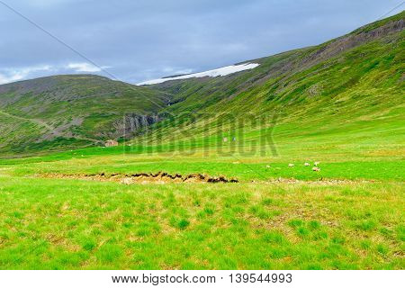 Countryside In The Strandir