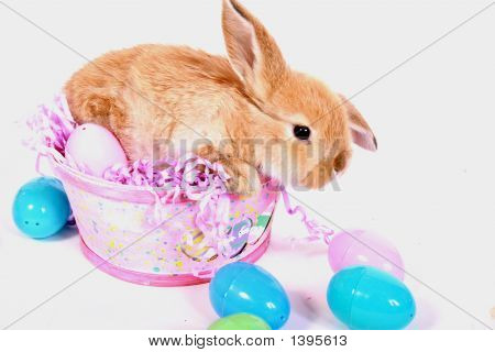 Easter bunny with isolated background and colorful eggs. poster