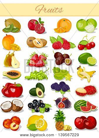 vector illustration of Fruit Product Food Collection