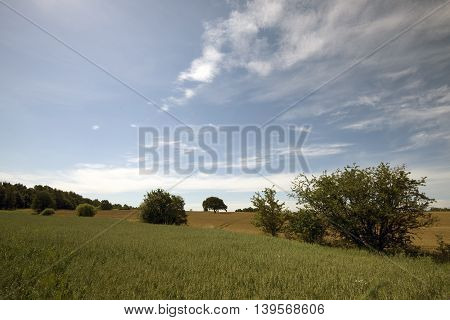 Danish landscape with oat and wheat fields - Trees and sunny blue sky and small clouds.