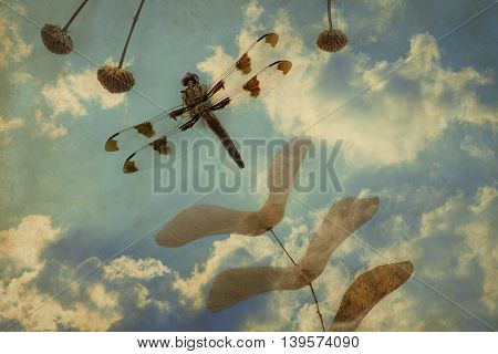 Dragonfly and dried seed pods in whimsical arrangement on grunge background