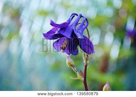 prachtige paarse bloem met zachte bokeh als achtergrond