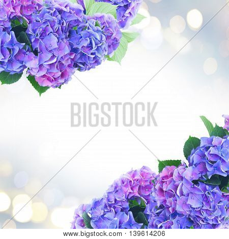blue and violet hortensia flowers and leaves on fancy glimming bokeh background