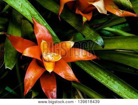 Tropical flowers in America's botanical gardens, USVI