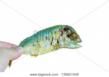mackerel fish fried in hand isolated on white background.