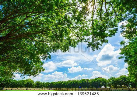 Big tree branch with blue sky .