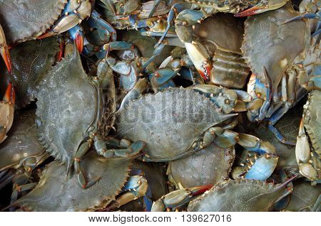 Blue crabs live for market as seen from above