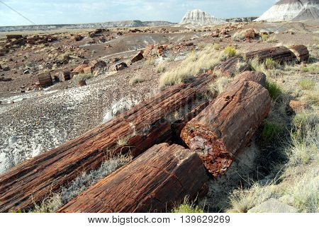 Petrified logs scattered on the ground at Petrified Forest National Park, Arizona