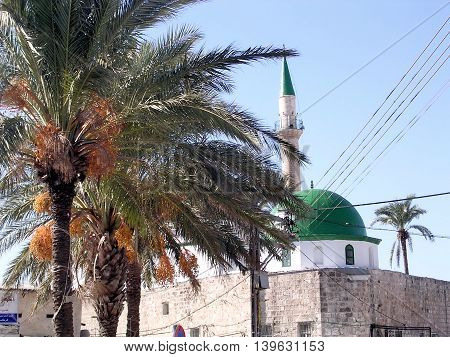 Palms and El-Jazzr Mosque in the old city of Acre Akko Israel