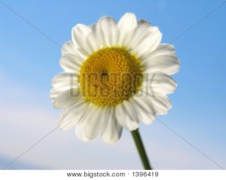 White Flower On A Sky Background