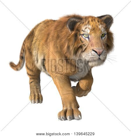 3d CG illustration of trotting tiger isolated