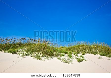 Grass On A Beach During Stormy Season