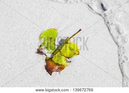 Beautiful Structured Leaves At The Beach Arranged By Nature