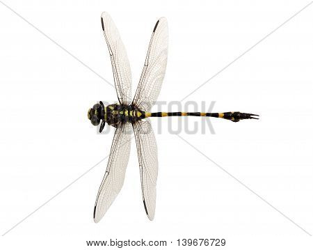 Dragonfly yellow and black color the isolated on white and objects with clipping paths.