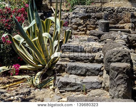 Archaeological site Capernaum, ancient ruins of the fishing village, steps and columns of black basalt, on the shore of the Sea of Galilee in Israel