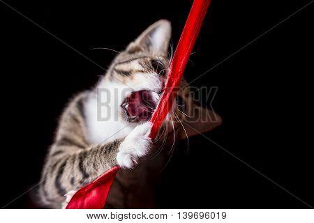 A Cute Kitten Catching A Red Lint In Midair