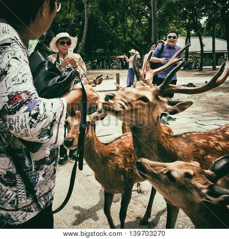 Nara - July 2016: Tourists feeding Sika deers by deer crackers. Nara Park